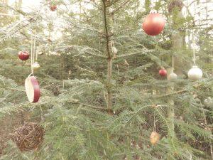 Im Rutesheimer Weihnachtswald. (Quelle:SW)